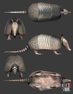 armadillo anatomy