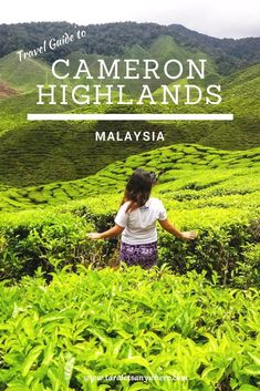 If countries were awarded for diversity, Malaysia would top first place. Not only is Malaysia a melting pot of ethnic cultures, but it is also a blend . Malaysia Itinerary, Malaysia Travel, Asia Travel, Travel Plane, Borneo, Kuala Lumpur, Cameron Highlands, Backpacking Asia, Travel Guides