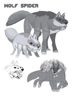 "Wolf Spider Sketches<<< Okay at first I was like ""what?"" but now I kinda like it, or at least the one at the bottom with all the babies. Mythical Creatures Art, Weird Creatures, Mythological Creatures, Magical Creatures, Creature Drawings, Animal Drawings, Wolf Drawings, Monster Design, Monster Art"