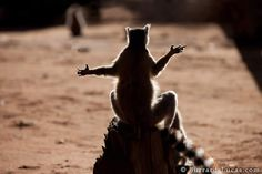 """""""Be still, and know, that I am Lemur"""""""
