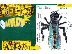 Bee-fore and After Posters   Center for Student Work