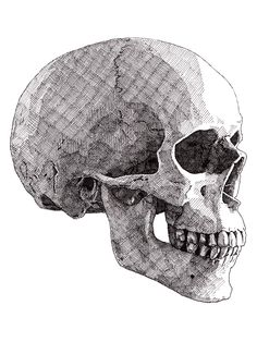 The finished drawing of my thirdskull (series of five) #rikreimert #skulls #crosshatching #art