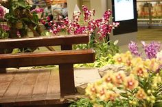 Changi Airport, Singapore - Pictures of the Orchid Garden - Part II