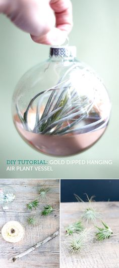 Gold-dipped air plant vessel from a clear Christmas ornament