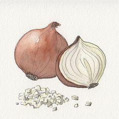 Onions #drawing #watercolour #watercolor #水彩 #onion #イラストレーション #イラスト #玉ねぎ #paint #illustration #food #foodillustration #painting #食べ物 #illustrator #art #artist #holbeinwatercolors #ホルベイン