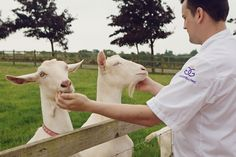 Toms Travels - Tom visits Brock Hall Farm, The Daffodil's #goatscheese supplier in #Shropshire