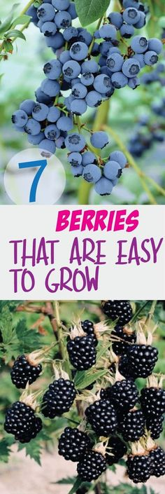 Terrace Garden - 7 Berries That Are So Easy To Grow – Making DIY Fun This time, we will know how to decorate your balcony and your garden easily with plants Veg Garden, Fruit Garden, Edible Garden, Lawn And Garden, Terrace Garden, Vegetable Gardening, Veggie Gardens, Garden Soil, Garden Types