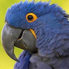 Macaw | San Diego Zoo Animals