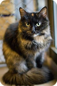 Beautiful and so tempting for people, I am a little bit skittish with people. If you approach me slowly, I won't refuse a little scratching, especially behind my ears. I tend to observe everything, chilling on a kitty bed, sometimes by myself and sometimes with other kitties. The person that rescued me said that I …