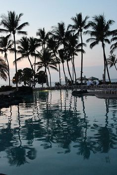 Swimming Pool, Fairmont Orchid, Hawaii, Pacific Ocean, Coconut Trees