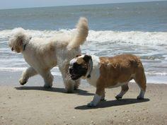Kramer and Drew at Cape San Blas.