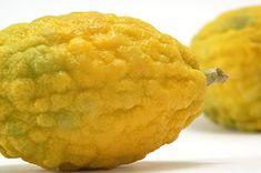 Cedro: le proprietà e i benefici per la salute e tre deliziose ricette per gustarlo in insalata