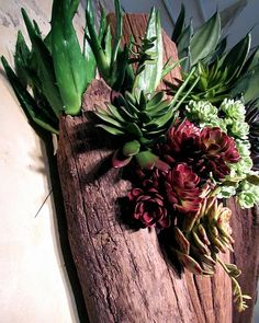 Artful faux succulents in driftwood.   Rolling Greens