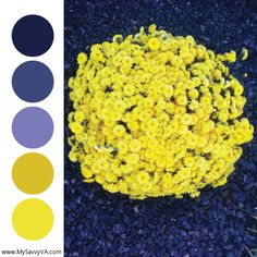 Color Palettes – Inspiration from Nature