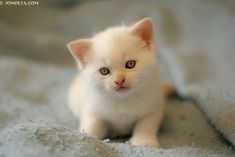 I have never had a white kitty! That will be next! :)