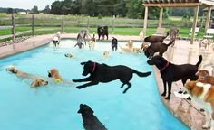 This Doggie Pool Party Is The Funnest Thing You'll Watch This Week!
