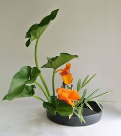 Biophilic & Sustainable Interior Design · Ikebana: the flower arrangement art coming from Japan · DforDesign - Ikebana arrangement, perfect décor in a minimalist interior. Ikebana Arrangements, Tropical Flower Arrangements, Ikebana Flower Arrangement, Beautiful Flower Arrangements, Flower Vases, Beautiful Flowers, Cactus Flower, Exotic Flowers, Purple Flowers