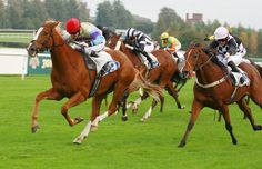 Racing at Leicester Racecourse