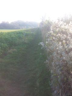 Prachtige heg, dwars door de velden richting Heerlen!