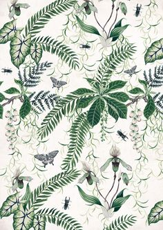 Really beautiful botanical ministrations illustrations – wow! Wish she did them as fabric/wallpapers as well