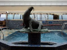 Seal on Carnival Liberty-cruise in June! Carnival Liberty, Wedding Week, Cruise Ships, Cruises, Whale, September, Random, Tips, Versailles