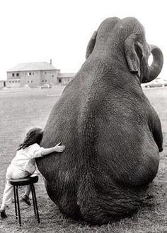 elephant <3<3