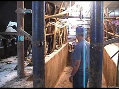 Dahlberg Low Cost Milking Parlor | CLIP.SAIBDUAB.COM