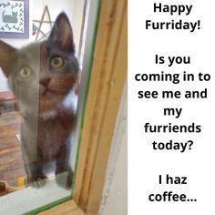 Look at that face!! #fuzzyface #furrface #furrball #cat #Cats #catsandcoffee #catcafe #meow #bestmeow #meowmeow #lovecats #lifewithcats #catsarethebest #catstagram #cats_of_instagram #instacat #gato #doylestown #buckscounty #adoptdontshop #adoptacat #catadoption Instagram News, Cats Of Instagram, Cat Cafe, Face, Gatos, Faces, Facial