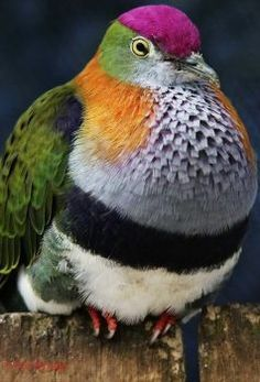 Solve bird of many colors (I'm calling him Joseph) jigsaw puzzle online with 35 pieces Most Beautiful Birds, Pretty Birds, Rare Birds, Exotic Birds, Exotic Pets, Tropical Birds, Colorful Birds, Bird Pictures, Animal Pictures