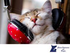 Los gatos y la música. LA MEJOR CLÍNICA VETERINARIA DE MÉXICO. Gracias al experimento Bubna-Littitz, se descubrió que la música con el ritmo correcto parece inducir un estado de relajación y calma a los gatos. Podrías hacer la prueba, a ver cómo funciona con tu mascota. En Clínica Veterinaria del Bosque, te damos tips para que tu mascota lleve una vida sana y saludable. #veterinariadelbosque