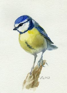 eurasian great tit bird watercolor - Google Search
