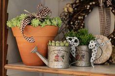 Páscoa - decoração de almoço country chic - arranjos de suculentas em vaso de barro e regador ( Arranjos: Lucia Milan )