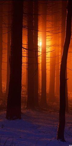 ✿ڿڰۣ Orange light thru the trees....   #photography #nature