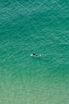 Don't stop believing.  Head for the shore but enjoy the paddle.  Just my luck there would be a circling of sharks.  lol    ;)