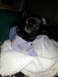 Daisy may in her long john pjs puggy love pinterest long johns puggy sue long johns ready altavistaventures Images
