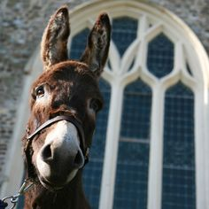#Donkey. And look at that gorgeous #window!