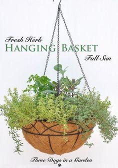 Getting Creative & Saving Money on Hanging Baskets - Container Gardening Diy Hanging Basket Stand, Winter Hanging Baskets, Artificial Hanging Baskets, Hanging Basket Storage, Plants For Hanging Baskets, Hanging Herbs, Hanging Succulents, Baskets On Wall, Hanging Planters