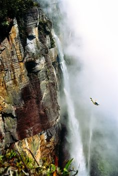 Base jumping em Angel Falls, Venezuela... One day. For now it's on the bucket list