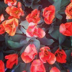 Looks like spring  ...feels like fall ;) Firefly Events @ffireflyevents Instagram photos
