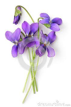 Bunch of Violets by Anna Sedneva, via Dreamstime