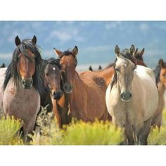 Don't you just love these Wild Mustangs in AZ. #mustangs  #wildthings  # calculture #horse