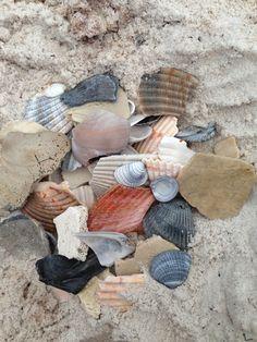 Seashells...Gulf-shores, Alabama
