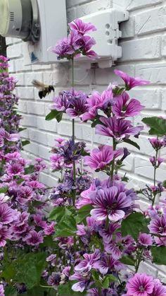 Hollyhocks Flowers, Flowers Perennials, Planting Flowers, Vintage Garden Decor, Diy Garden Decor, Garden Art, Garden Yard Ideas, Lawn And Garden, Khadra