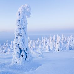 Snow covered landscape in Salla, Finnish Lapland.