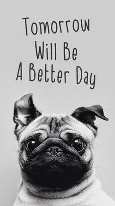 Tomorrow Will Be A Better Day Pug Face #iPhone #5s #wallpaper