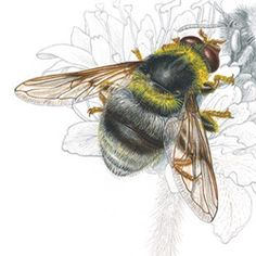 Bee Art, Watercolour Tutorials, Insects, Watercolor, Google, Animals, Pen And Wash, Watercolor Painting, Animales