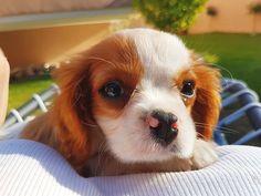 Recognizing the Red Flags of Dog Diarrhea https://www.petful.com/pet-health/managing-doggie-diarrhea/