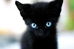 Minereva Lux's kitten ... ---black kitten