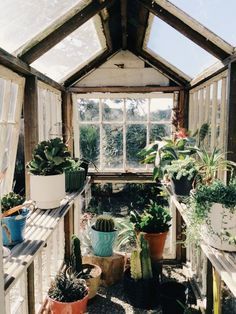 Window pane green house.