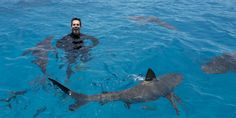 Eli Roth Interview - Eli Roth Swims with Sharks